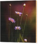 Wild Daisy Flowers  Wood Print