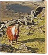 Wild Dartmoor Pony Wood Print