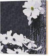 Wild Dogwood Blooms Wood Print