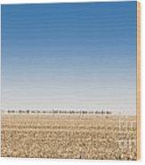 Wild Emus Wood Print by Tim Hester