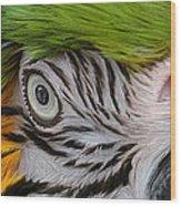 Wild Eyes - Parrot Wood Print
