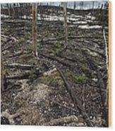 Wild Fire Aftermath Wood Print