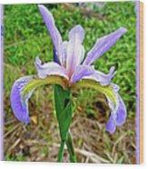 Wild Flag - Iris Versicolor Wood Print
