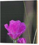 Wild Flower Bloody Cranesbill Wood Print