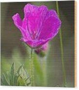 Wild Flower Bloody Geranium Wood Print