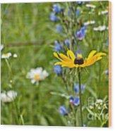 Wild Flower Delight Wood Print
