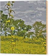 Wild Flower Field Abstract Wood Print