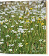 Wild Flower Meadow Wood Print