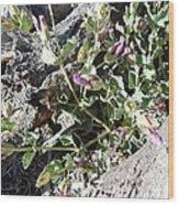Wild Flowers 1 Wood Print