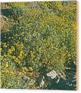 Wild Flowers, Anza Borrego Desert State Wood Print