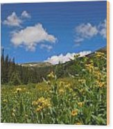 Wild Flowers In Rocky Mountain National Park Wood Print