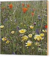 Wild Flowers Russian Ridge Wood Print