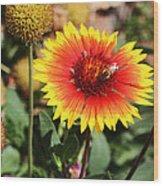 Wild Flowers Sierra Ancha Mountains Wood Print