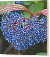 Wild Fruits2 Wood Print