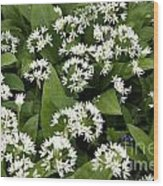 Wild Garlic Wood Print