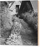 Wild Garlic Track Wood Print
