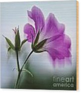 Wild Geranium Abstract Wood Print
