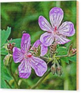 Wild Geranium On Trail To Swan Lake In Grand Teton National Park-wyoming Wood Print