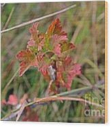 Wild Gooseberry Leaves Wood Print
