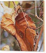 Wild Grapevine Leaf Wood Print