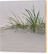 Wild Grass With Deep Roots 8x10 Wood Print by Michael Flood