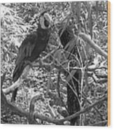 Wild Hawaiian Parrot Black And White Wood Print