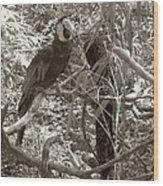 Wild Hawaiian Parrot Sepia Wood Print