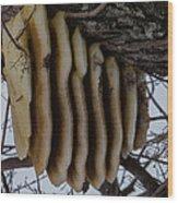 Wild Honey Bee Nest Wood Print