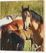 Wild Horse At Lunch Wood Print