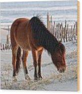 Wild Horse At Sunrise Wood Print