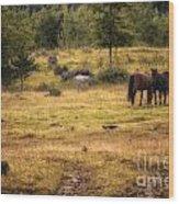 Wild Horse Band In Kananaskis Country Wood Print