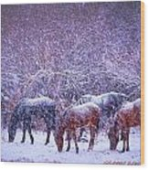 Wild Horse Christams Wood Print by Jeanne  Bencich-Nations