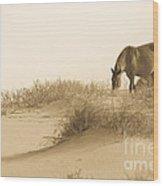 Wild Horse Wood Print by Diane Diederich