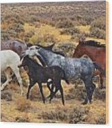 Wild Horse Family Wood Print