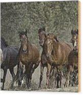 Wild Horse Herd Wood Print
