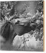 Wild Horse In Dunes Wood Print