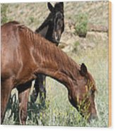 Wild Horse Mama And Her Baby Wood Print