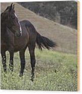 Wild Horse Mare Wood Print