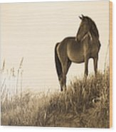 Wild Horse On The Beach Wood Print by Diane Diederich