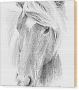 Wild Horse Pencil Portrait Wood Print