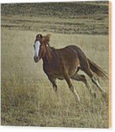 Wild Horse Running-signed-#7273 Wood Print