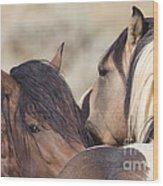 Wild Horse Secrets Wood Print