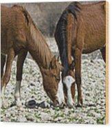 Wild Horses Grazing  Wood Print
