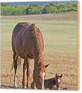 Wild Horses Mother And Baby Wood Print