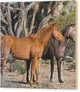 Wild Horses Of Joshua Tree Wood Print