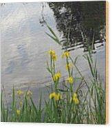 Wild Iris By The Pond Wood Print by Ausra Huntington nee Paulauskaite
