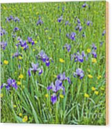 Wild Iris Patch Wood Print