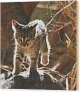 Wild Kitten Happy To Be Alive Wood Print