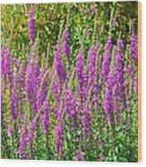 Wild Lavender Flowers Wood Print