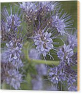 Wild Lavender Wood Print